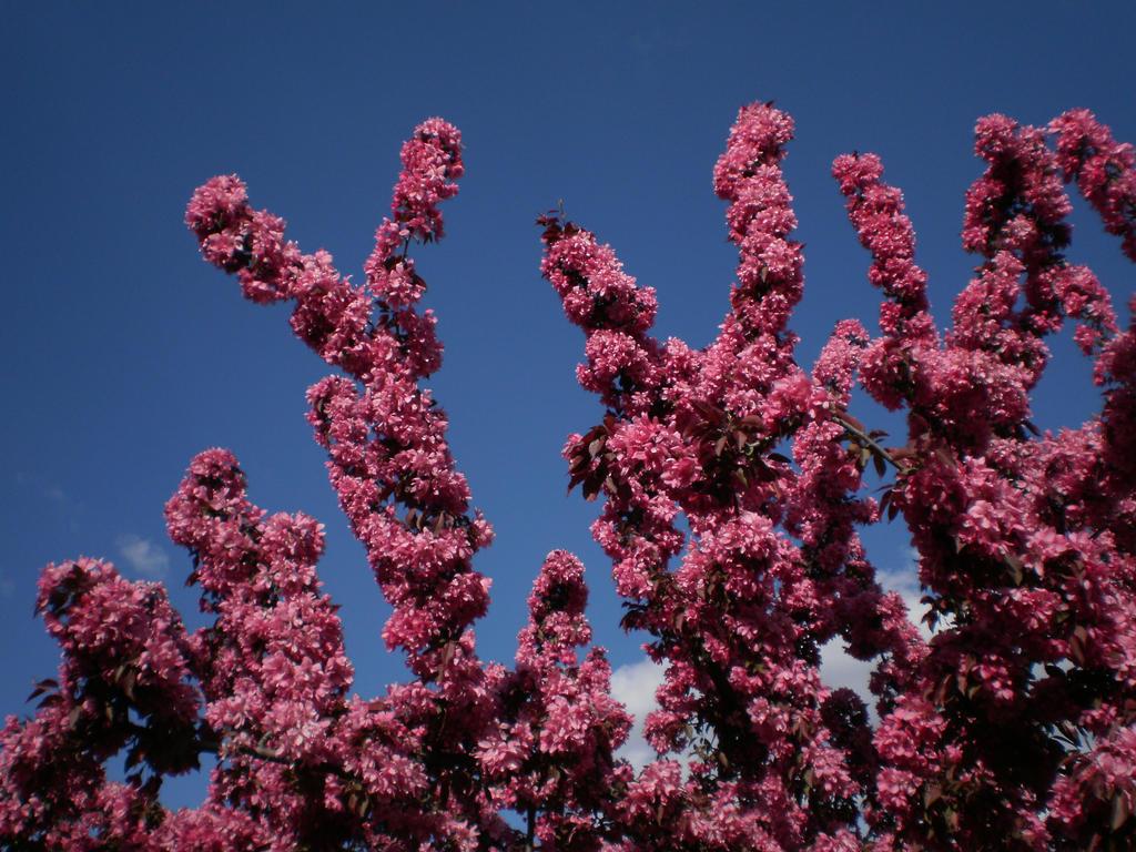 Flower Pillars by Pentacle5