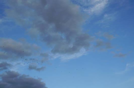Sky Flock