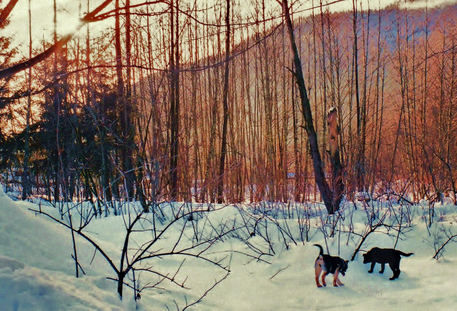 Snow dogs by lucium55