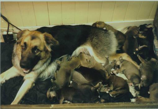 Multy pups
