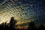 Cotten sky