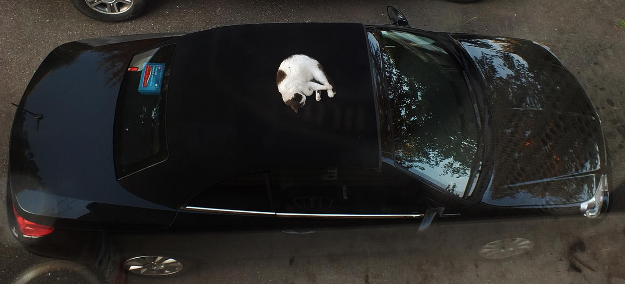 Cat sleeping on my car by lucium55