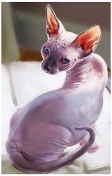 Sphynx Study by suriguri