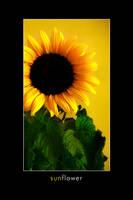 Sunflower by Derfel