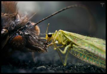 Bug love by Fyrrea