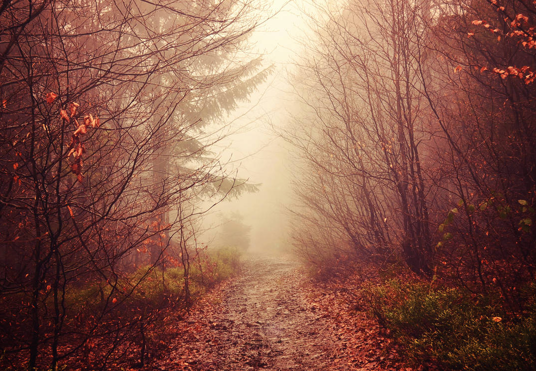 Mist by Fyrrea