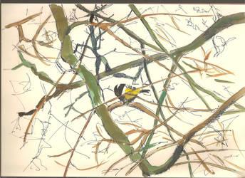 bird by GlenRandom