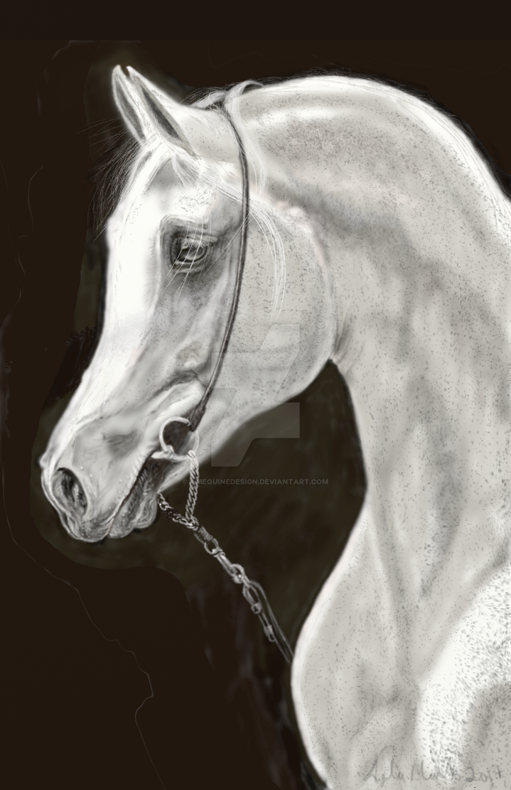 Speckled Arabian - Portrait by amequinedesign