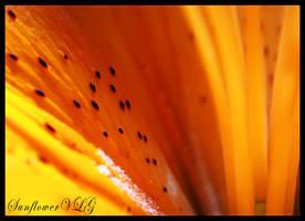 Flower Freckles by sunflowervlg