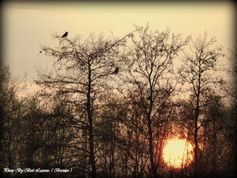 The Crows enjoy the sunset. by Bermiro