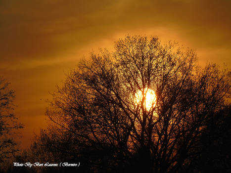 Full sunset behind the tree.