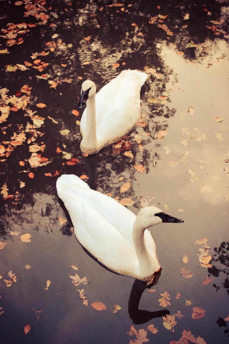 Herbstschwan by Toastnascher