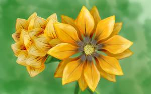 Orange Flower by Hupie