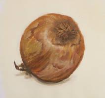 Onion study by Hupie