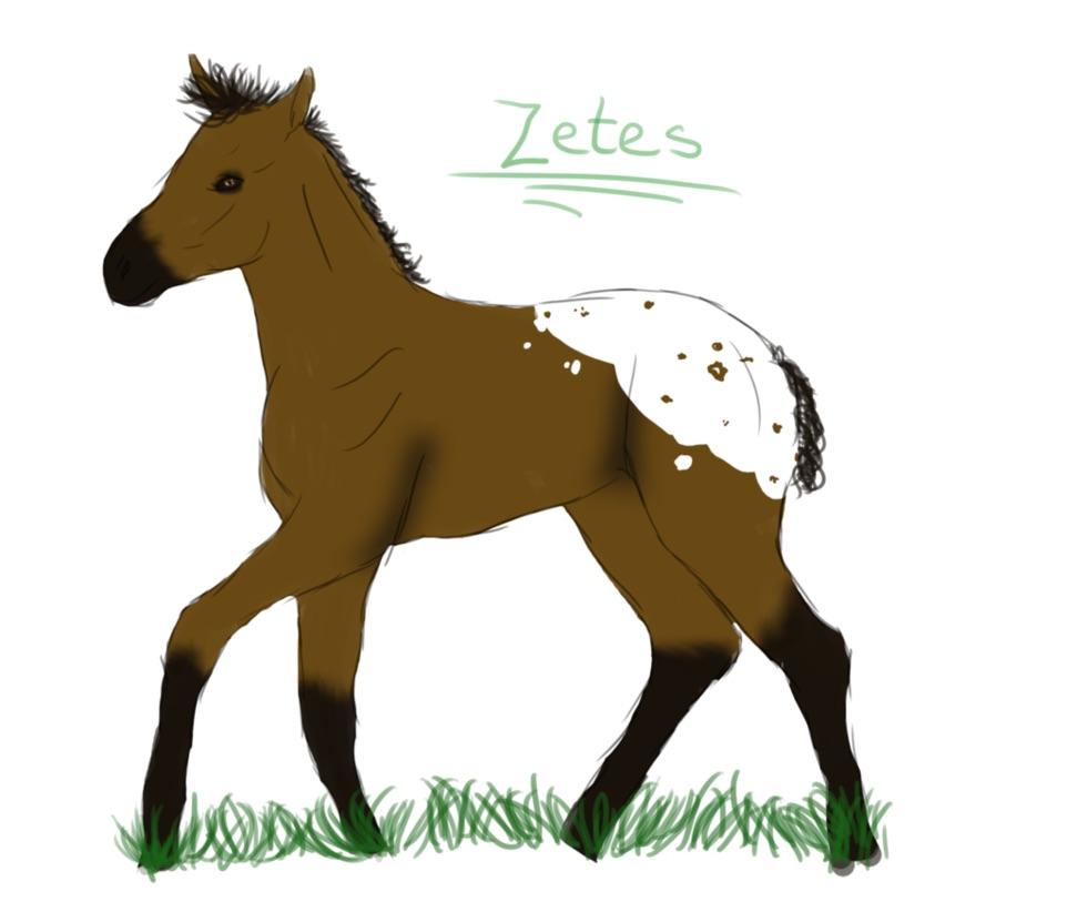 Zetes Foal ref by Kaylied-Estal