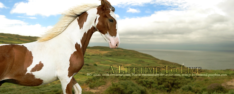 Lifetime to live horse pic by Kaylied-Estal