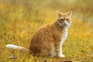 Orange Cat Is Orange by janernn