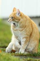Jaw Dropper Cat by janernn