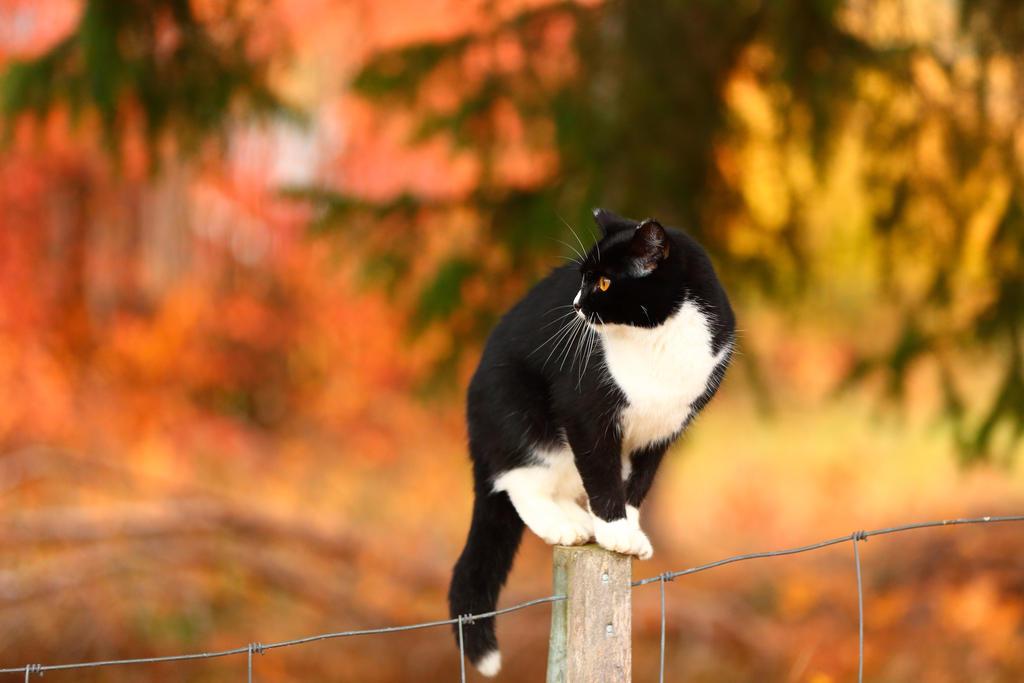 Autumn Cat by janernn
