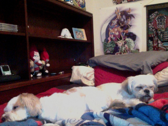 my two dogs on my bed by cat55