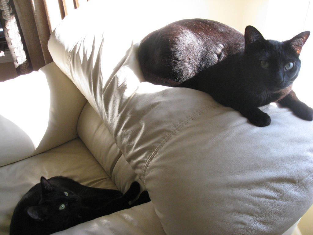 two black cats part 2 by cat55