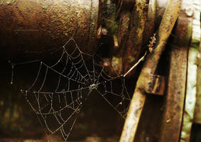 Web by CenkDuzyol