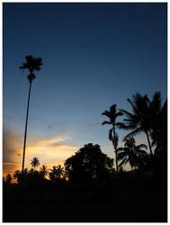 Dawn by motionstudy