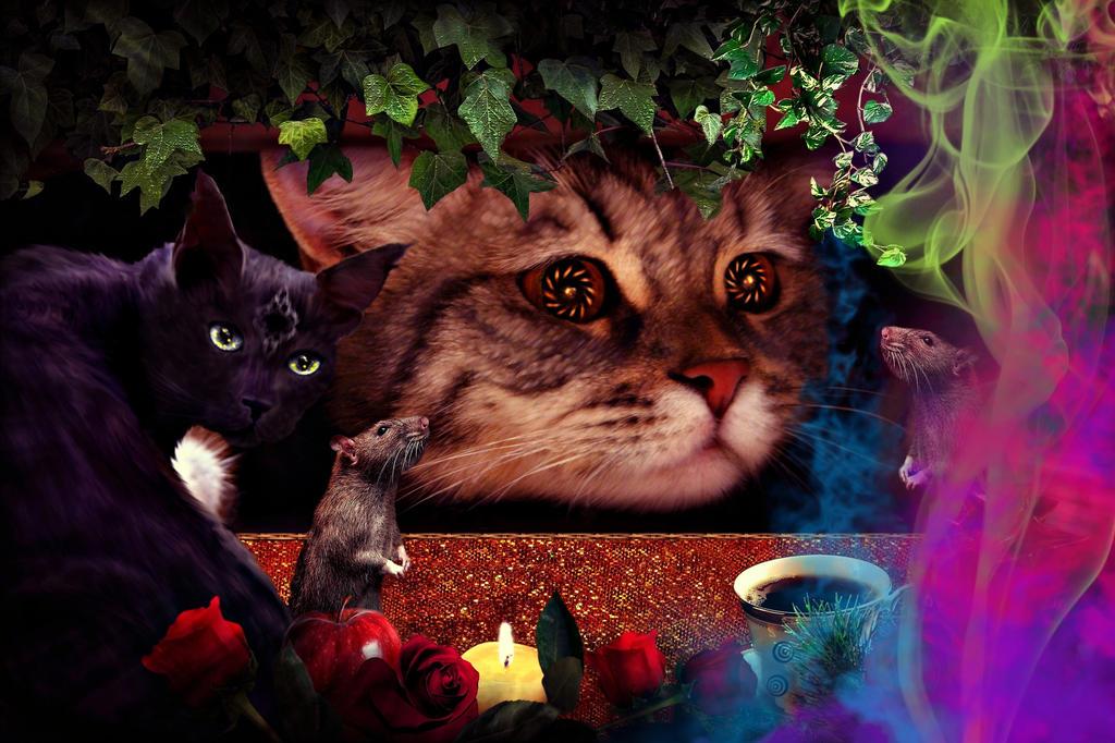 Feline Witchery by allison731
