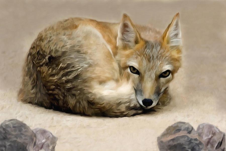 Little Fox by allison731