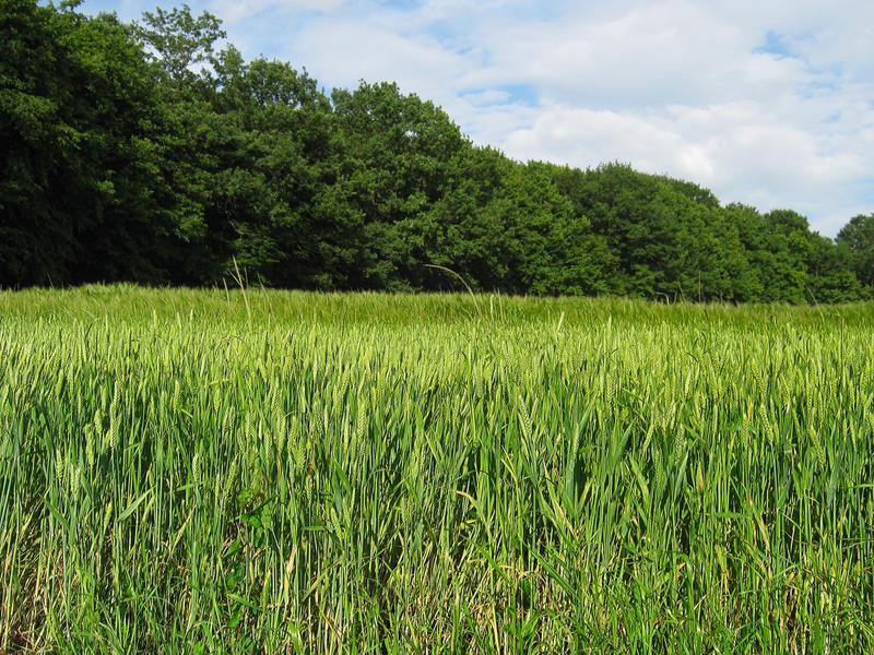 Green Fields by allison731