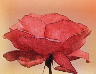 Rose by allison731