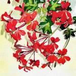 Red Geranium on Canvas