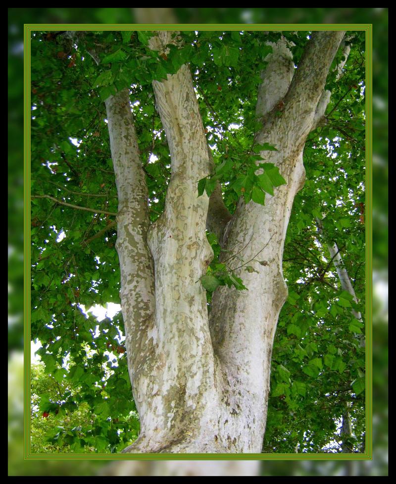 Green Tree by allison731
