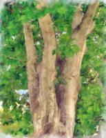 Tree by allison731