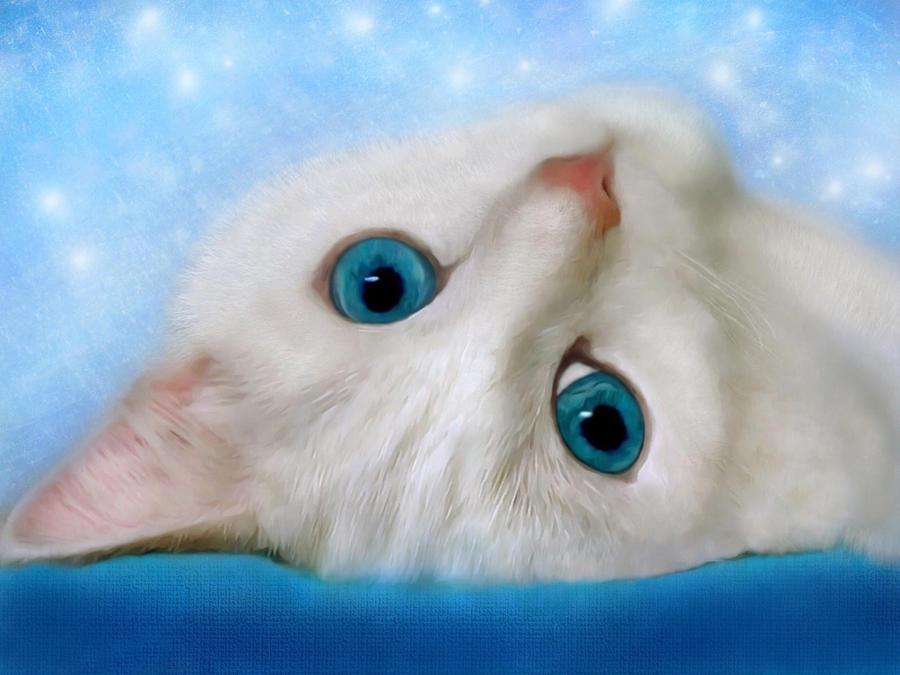 Blue Cat Eyes by allison731