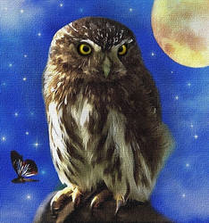 Owl in the Night by allison731