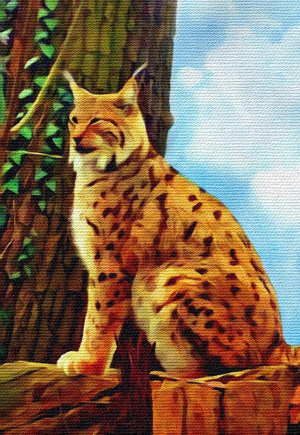 Bobcat by allison731