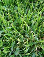 Green Grass by allison731
