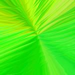 Glassy Leaf Texture