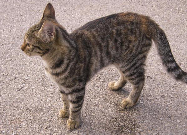 Cute Kitty by allison731