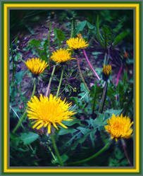 Dandelion by allison731