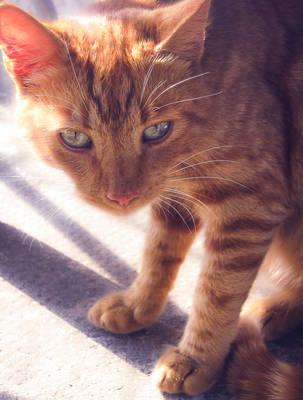 Ginger Cat by allison731