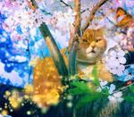 Spring Beauty III by allison731