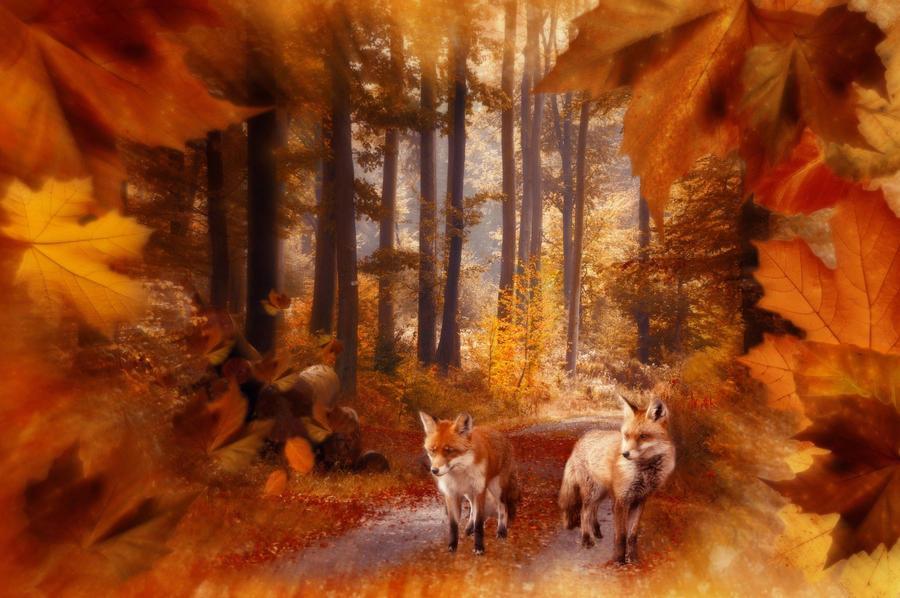 Autumn Beauty by allison731