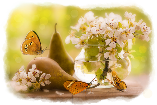 Pears and Butterflies