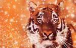 Tiger in Snow
