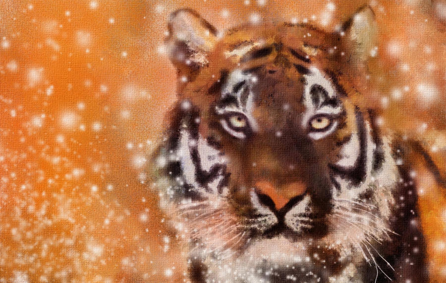 Tiger in Snow by allison731