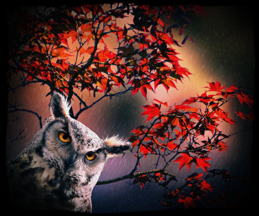 Fall into Owl Eyes by allison731