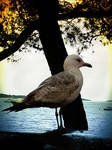 Seagull by allison731