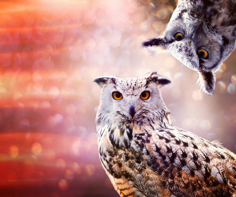 Owls by allison731